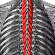 The-Stabilizing-System-of-the-Spine.-Part-I.-Function,-Dysfunction,-Adaptation,-and-Enhancement